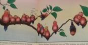 Sur la branche - Claude Ponti - L'Ecole des Loisirs - 2008. Sur la branche, nous faisons connaissance avec une famille d'oiseaux, la famille Brosselevant. Il y a Pioussouf, Orsonne, Duvette qui a toujours froid… La dénomination des oiseaux introduit le jeu, une référence aux qualités de chaque personnage. C'est une invitation à chercher dans l'image l'oiseau auquel correspond le nom. Ce livre dit aussi quelque chose de l'enfance, la gourmandise, par exemple, que l'on retrouve dans le nom de l'amoureux Tiramissou, ou bien de Lyli-Faisselle et son fromage. Le sens est à construire au fil de la lecture, dans un ailleurs au-delà du livre, comme souvent chez Claude Ponti. Ce faisant, chacun prend ce qu'il veut en fonction de ce qu'il est et du regard qu'il porte sur l'histoire. En cela, ce livre conforte l'intimité du lecteur.